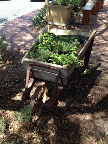 Outside Bloom is an edible garden in a wheelbarrow