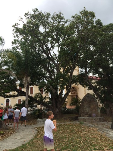 Next to the church was a mango tree. We picked and ate the mangoes and they tasted so much better than the mangoes in Sydney.