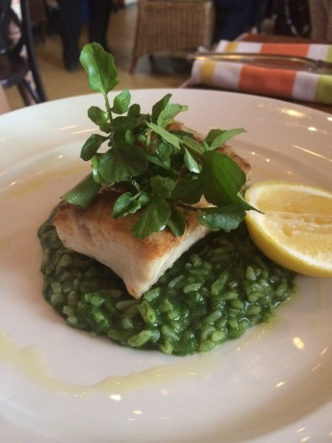 Fresh selected fish of the day with lemon and oil and risotto $35.00