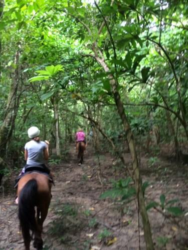 A ride through the rainforest