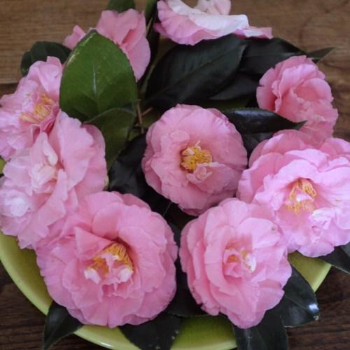 Flowers from Meg's garden