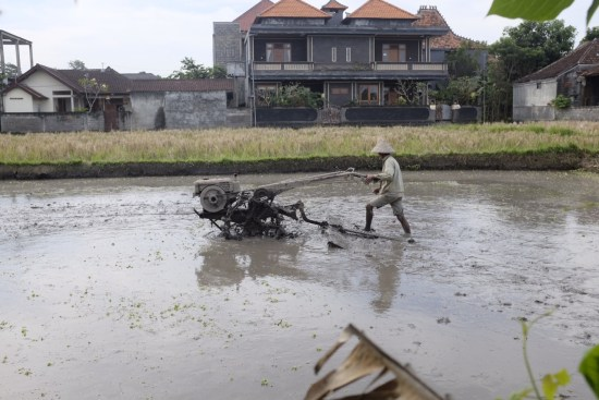 The rice paddy next to the restaurant.