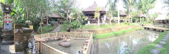 An enclosure of ducks