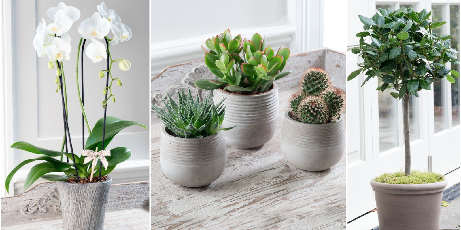 Small Household Plants Stylish Potted Plants From The House Beautiful Collection