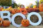 Brookfield Zoo Hosts Boo! at the Zoo Halloween Celebration