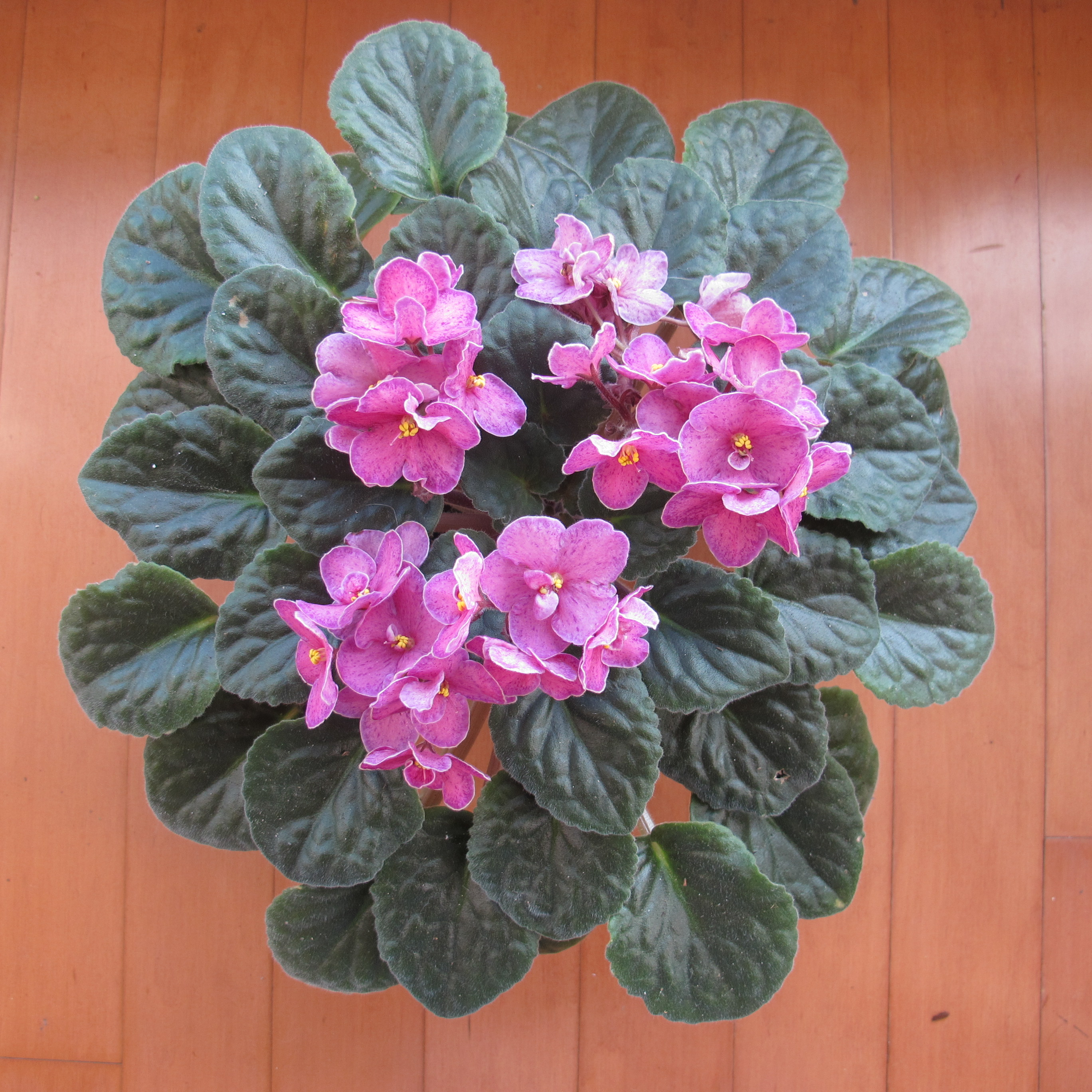 Small House Plants With Flowers Admin Page 2 Houseplants Now