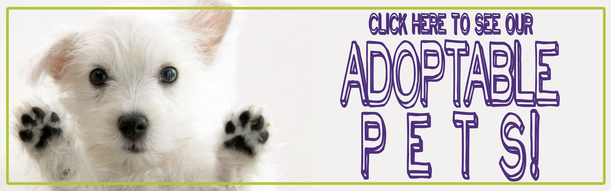 Rescue Dogs Puppies For Adoption Adopt A Pet Search Adoptable Pets