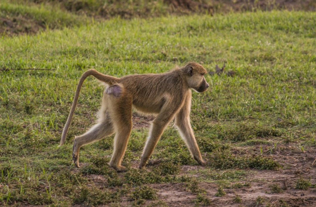South Luangwa Zambia | How Far From Home