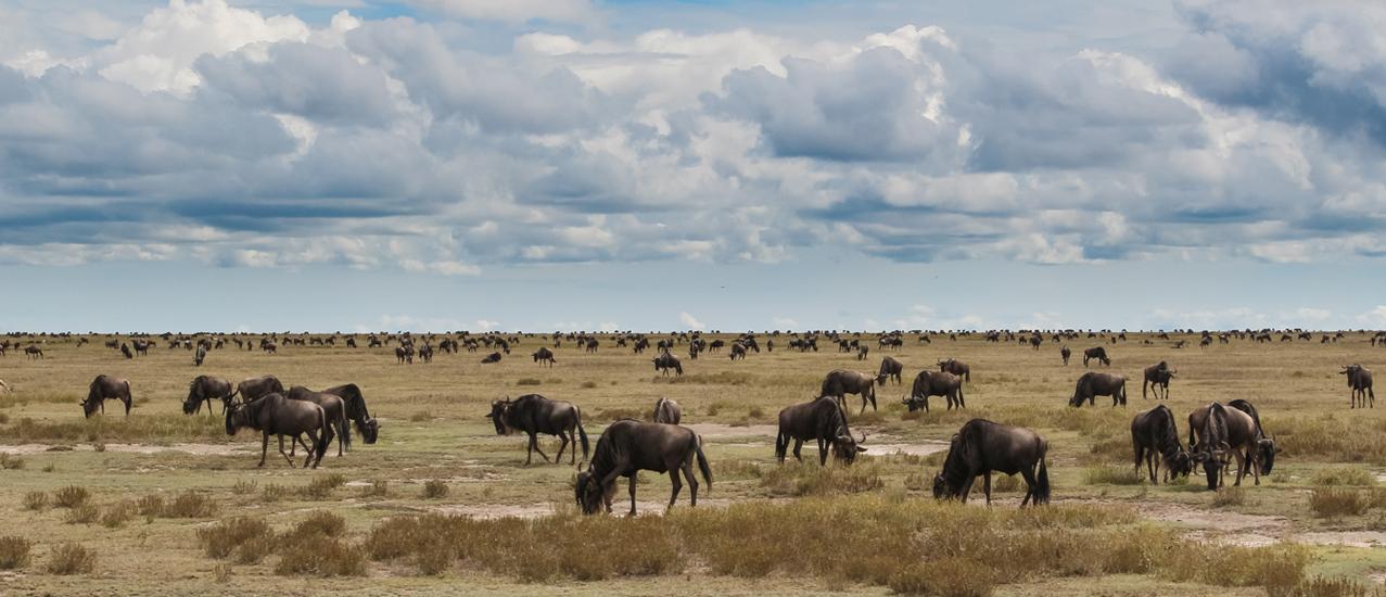 1440x550_Serengeti