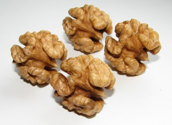 Walnuts are some pretty interesting nuts once they are shelled are prepared to eat!