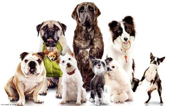 smartest-dog-breeds