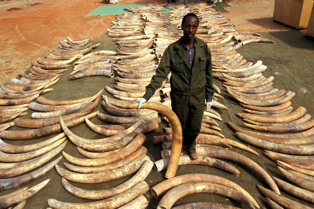ivory-trade image source: africageographic.com