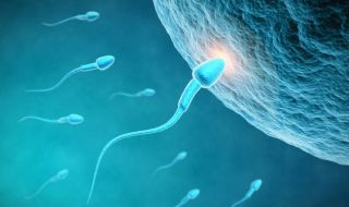 Sperm harpoon the egg to fertilize