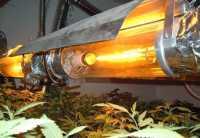 High Intensity Discharge (HID) Grow Lights