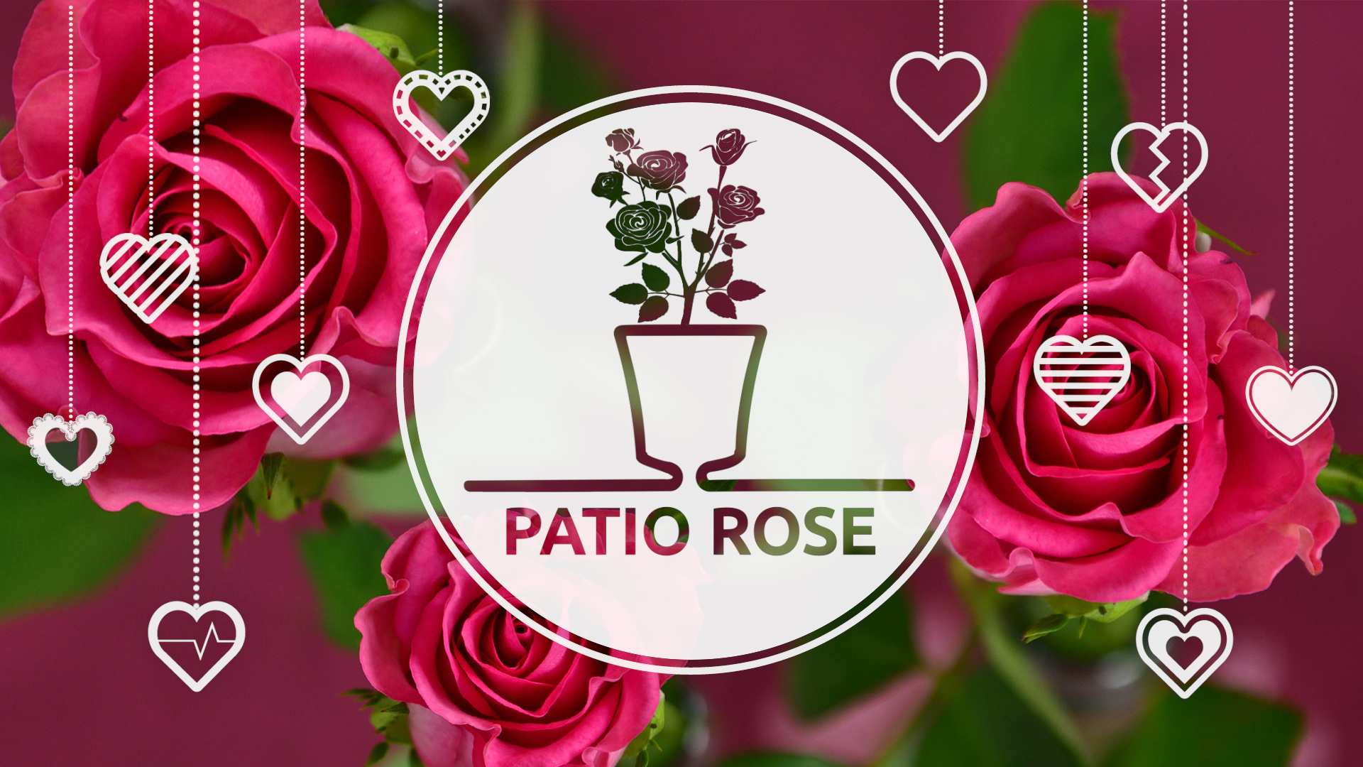 Arte Express Yourself How To Plant Patio Rose In Arte Purple 8march Special Edition