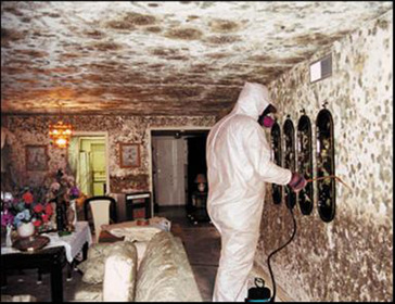How To Get Rid Of Black Mold On Walls how to get rid of black mold on bathroom walls