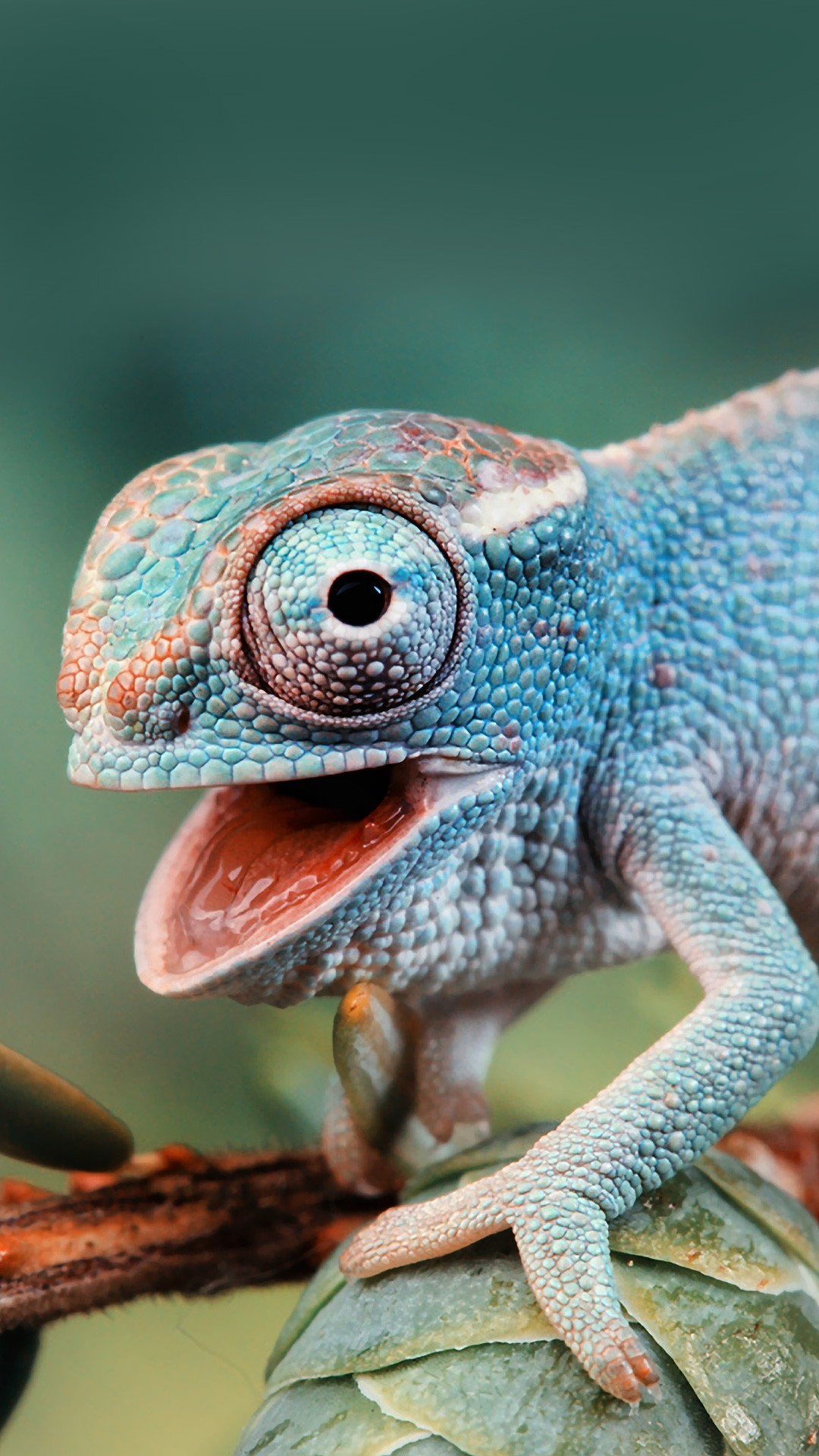 Cute Wallpapers For Phones For Free Cute Chameleon Best Htc One Wallpapers Free And Easy To