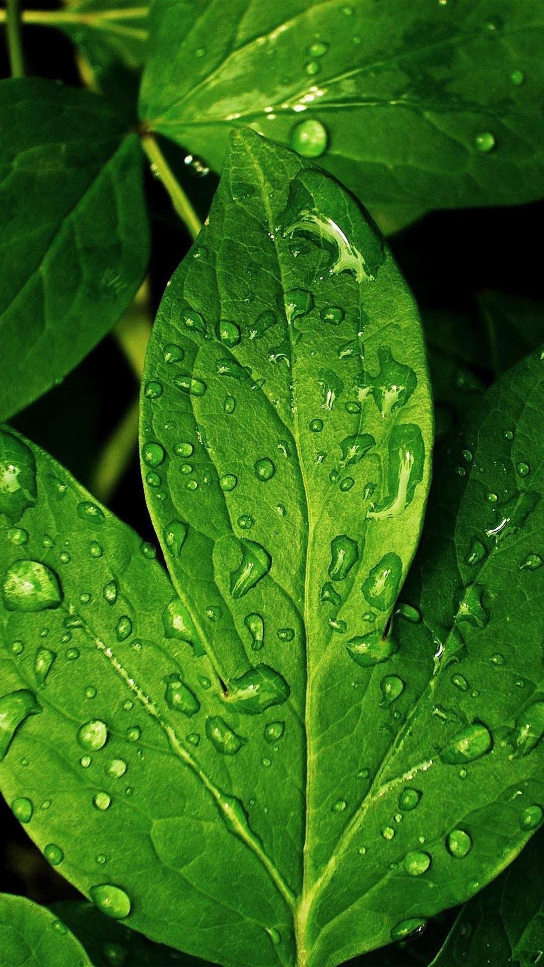 Htc One M8 Wallpaper Hd Morning Dew Green Leaf Best Htc One Wallpapers