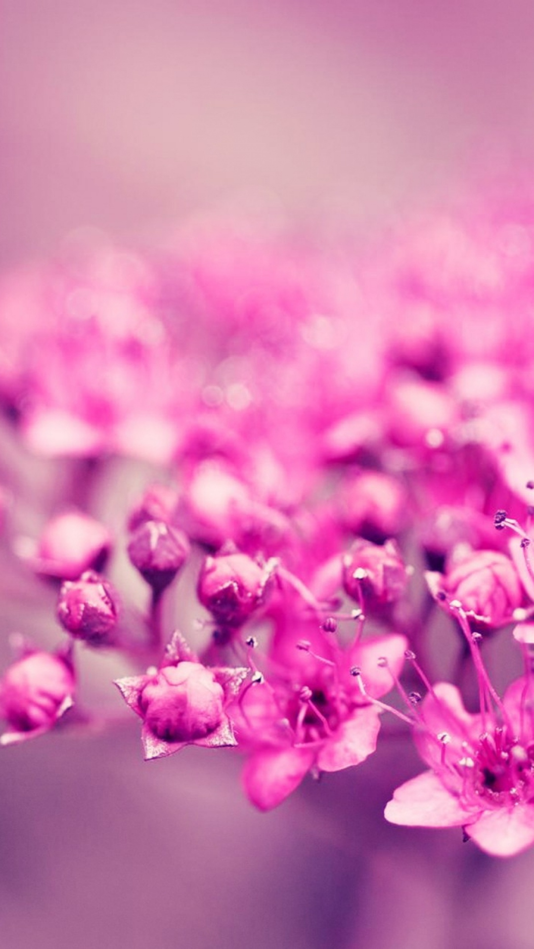Htc One M8 Wallpaper Hd Pink Flowers Summer Best Htc One Wallpapers