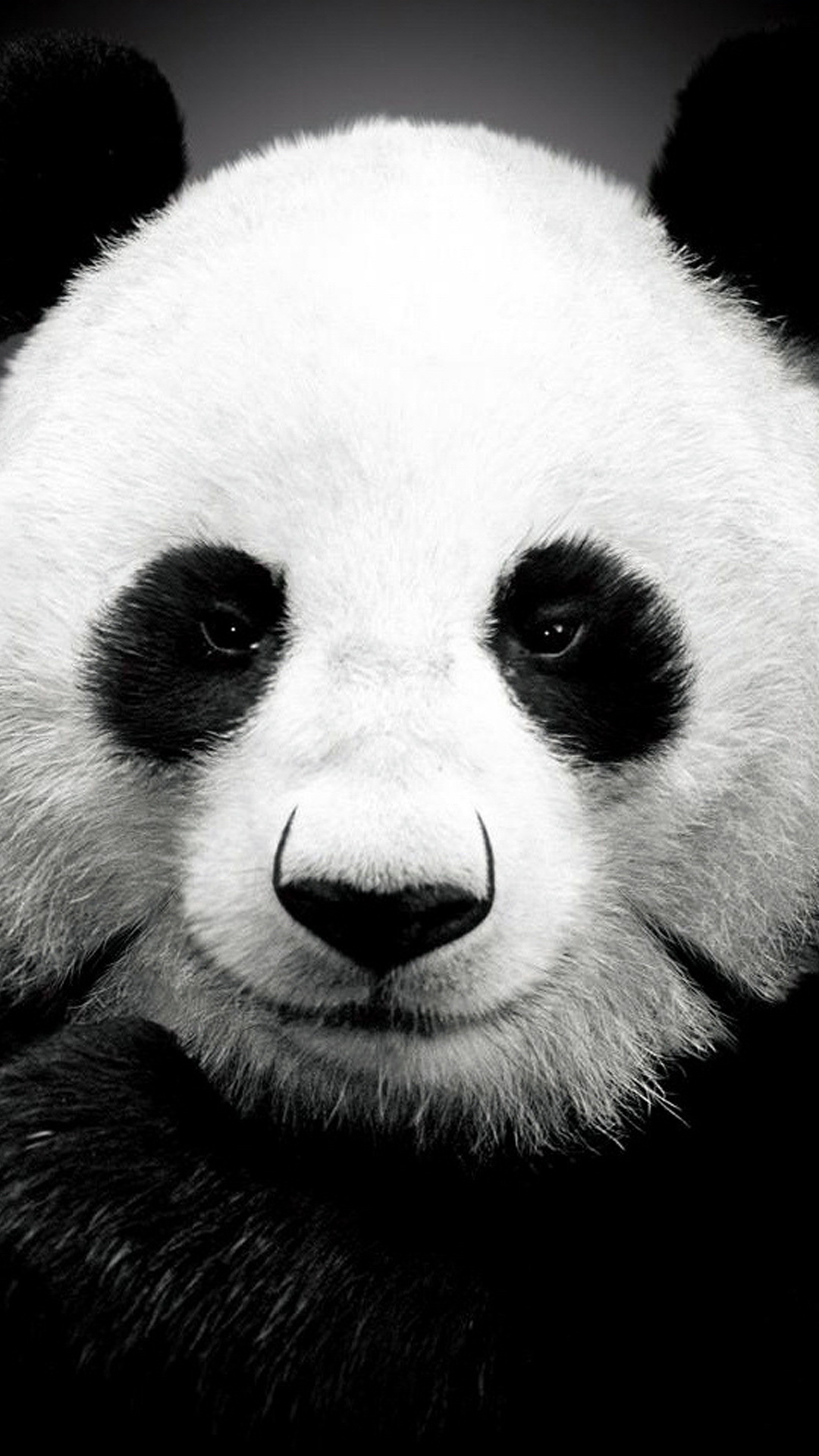 Panda Bear Cute Wallpaper Panda Bear Best Htc One Wallpapers Free And Easy To
