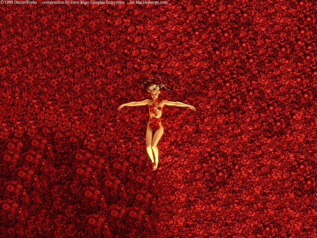 Blood Falling Wallpaper Dvd Belleza Americana American Beauty Sam Mendes