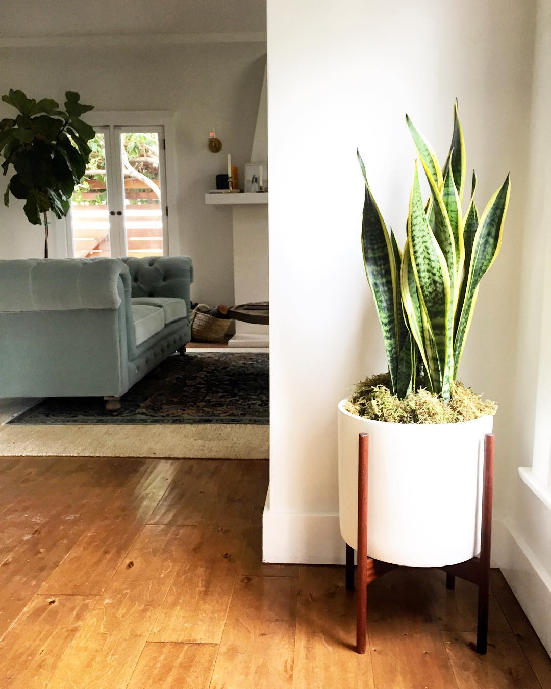Indoor Plants For The Office Five Houseplants You Can T Kill Huckberry