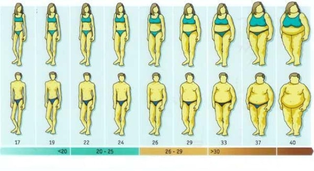 Pin by Deborah Castagnola on Weight Pinterest Fat, Bodies and - height weight chart