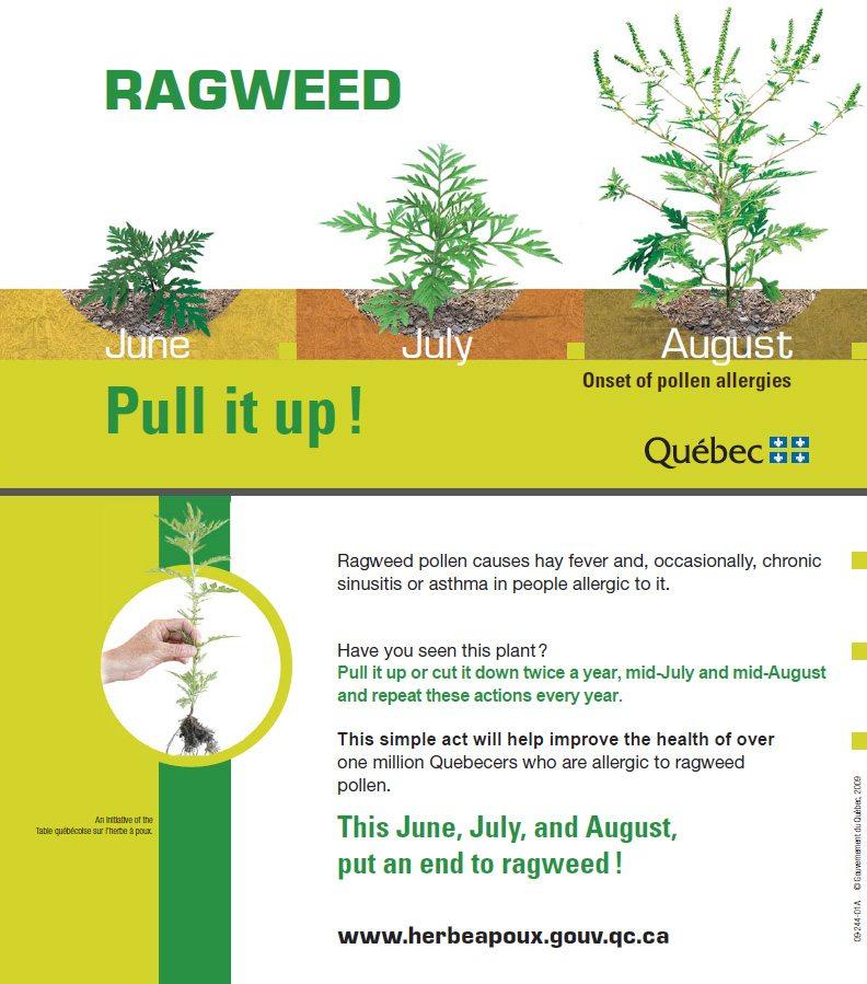 Town of Hudson Ragweed
