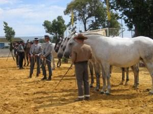 Los mejores caballos, de nuevo en Moguer.