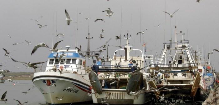 Barcos amarrados a puerto.