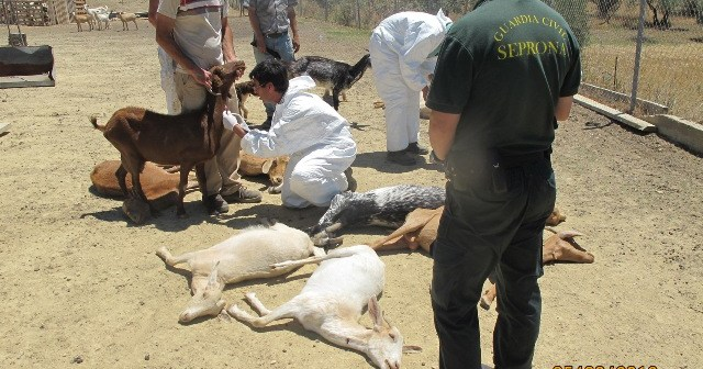 La Guardia Civil captura a los animales.