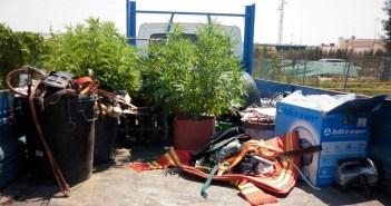 Material y plantas de marihuana intervenidas en la operación.