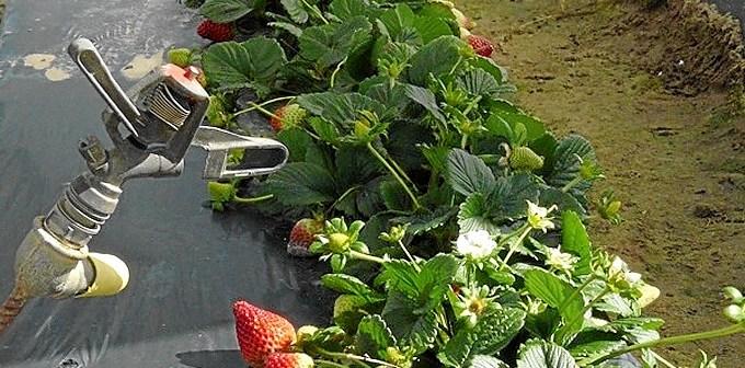 La agricultura onubense no puede desarrollarse más sin una apuesta decidida por los regadíos. (Foto: agrodiariohuelva)