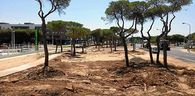 Tala de pinos en Punta Umbria 02