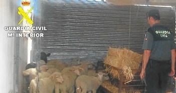 ganado recuperado en villablanca 5_135839_1