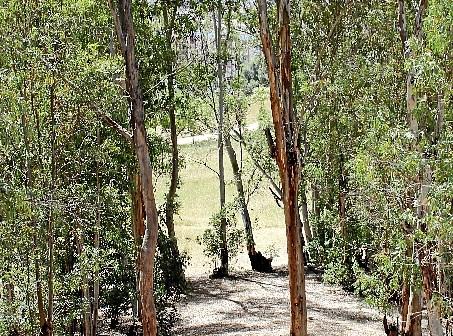 Eucaliptos Parque Moret