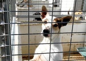 Foto refugio perros (1)