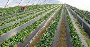La agricultura continúa siendo unos de los motores claves de la economía onubense.