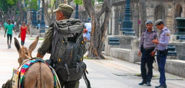 Burro de Huelva en La Habana (3)