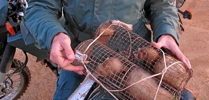 Caza conejos Seprona