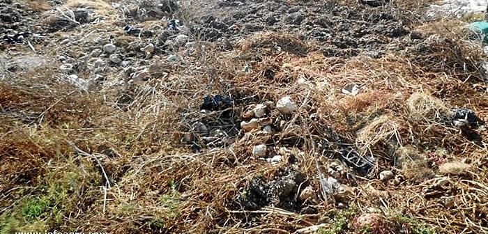 378-residuos_plasticos_y_vegetales_invernadero