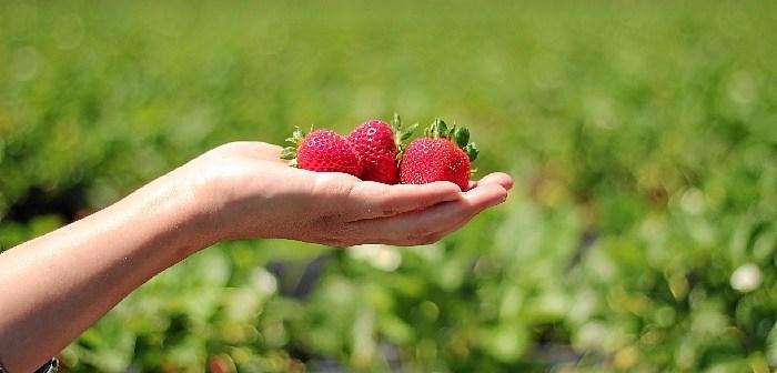 fresas convencionales
