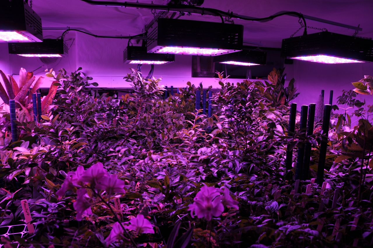 Lamparas Led Cultivo Cannabis Tutoriales Huertas Urbanas