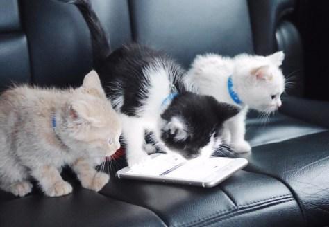Sachant que Choupette est l'un de ces trois chats, que sont devenus les autres?