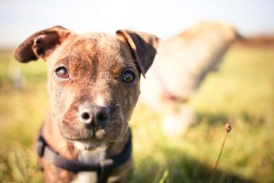 bindungsaufbau-welpe-training-mit-hund
