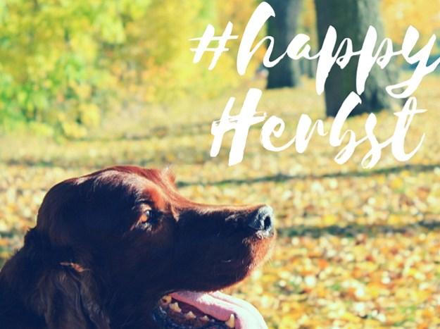 herbstfreuden-herbstspaziergang-herbst-mit-hund