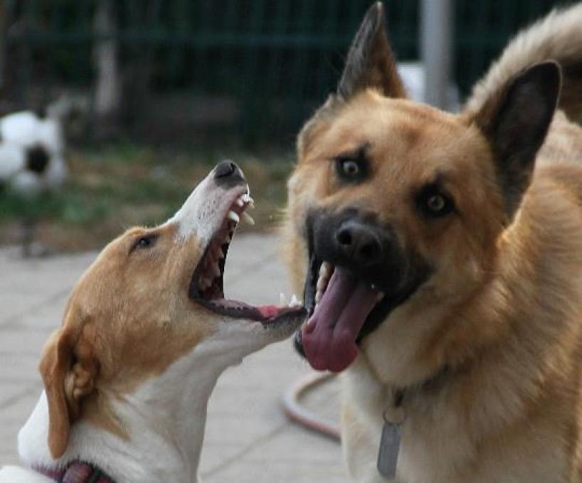 Bella und Anton