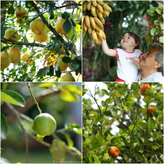 Fruits-Frutas