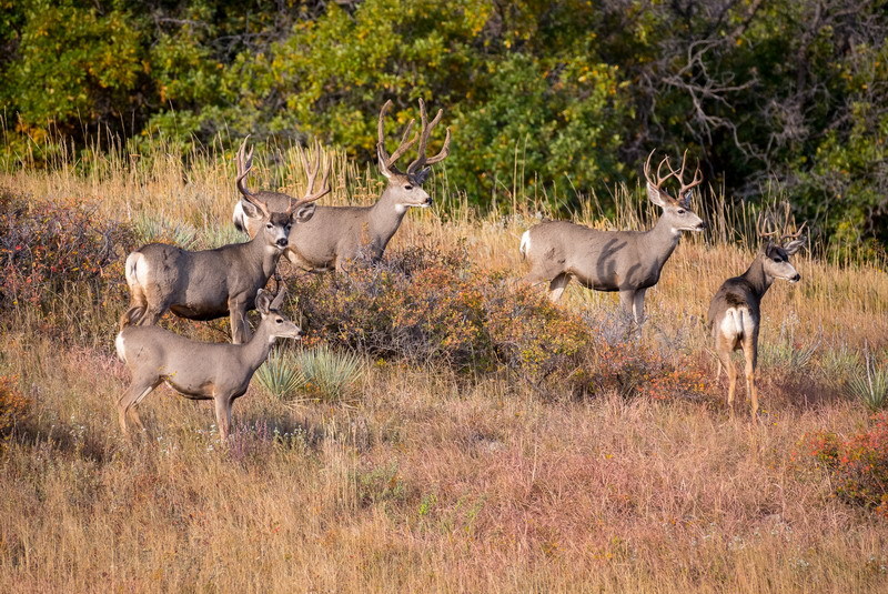 10 Things Every Hunting Lease Agreement Should Cover - HuntEmUp