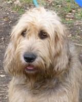 Goodbye Pris, Otterhound Dog News